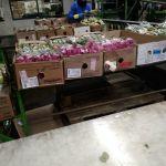 Работа и вакансии на цветочном предприятии в Голландии